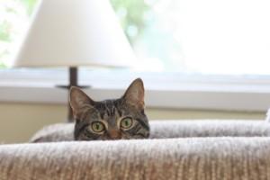 chat sur le canape